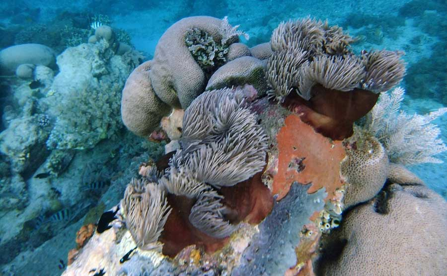 Gili Kondo Coral Reef