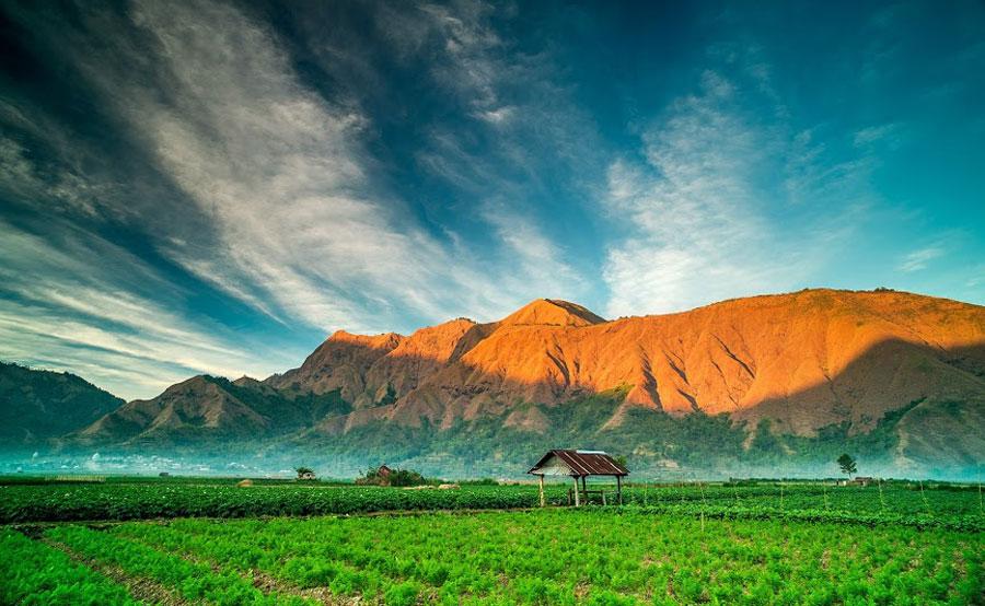 Here Pergasingan Hill in Sembalun Lawang, National Park Mount Rinjani